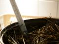 Pastöriseeritud hein ja termomeeter