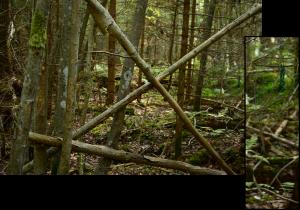Prügi metsas